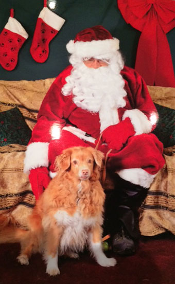 [Mocha the office pup with Santa Claus, 2016]